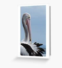 the pelican Greeting Card