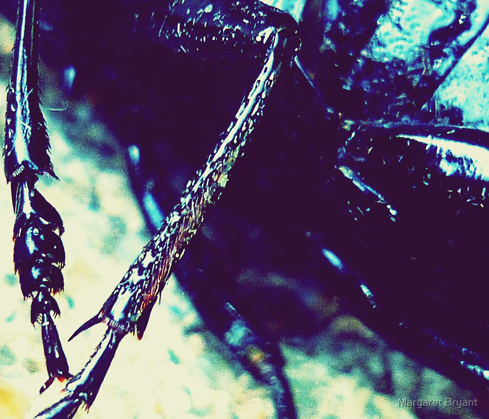 Creepy Nature by Margaret Bryant