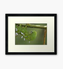 Caterpillar with Attachments  Framed Print