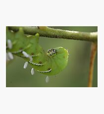 Caterpillar with Attachments  Photographic Print