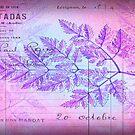 French Purple/Pink Grunge Fern Postcard by debsrockine