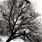 Winter Crows by Diane Johnson-Mosley