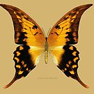 Swallow Tail Butterfly by Walter Colvin
