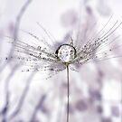 Dandelion Drops by Gazart