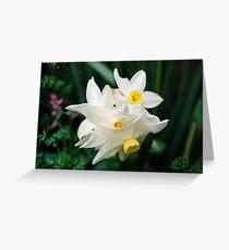 Daffodil flowers Greeting Card