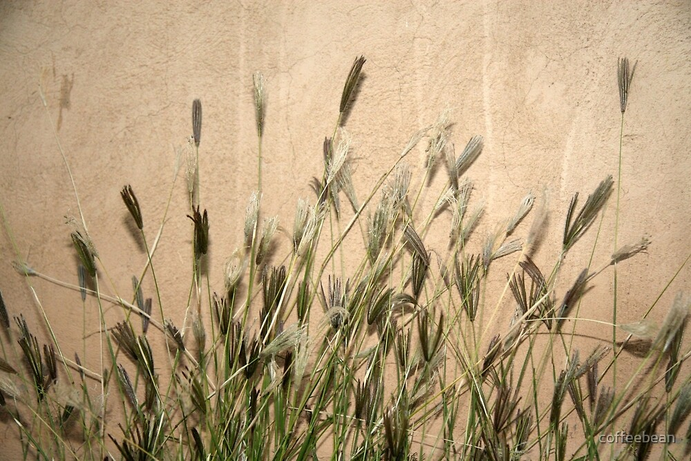 Adobe and Grasses by coffeebean