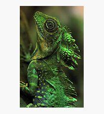 Emerald Scales Photographic Print