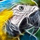 A strange Parrot  by Street-Art