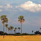 Hoping for rain by Explorations Africa Dan MacKenzie