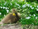 Stop and Eat the Dandelion  by Elaine Manley