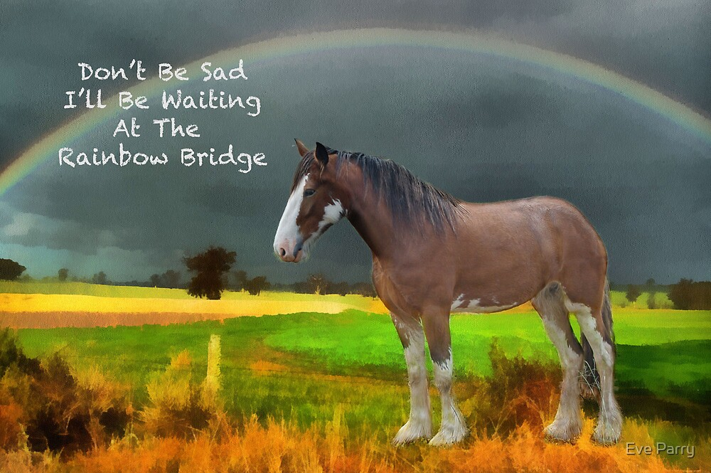 u0026quot sympathy card for loss of horse u0026quot  by eve parry