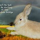 Sympathy Card For Loss Of Pet Rabbit. by Eve Parry