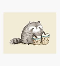 Raccoon on Bongos Photographic Print