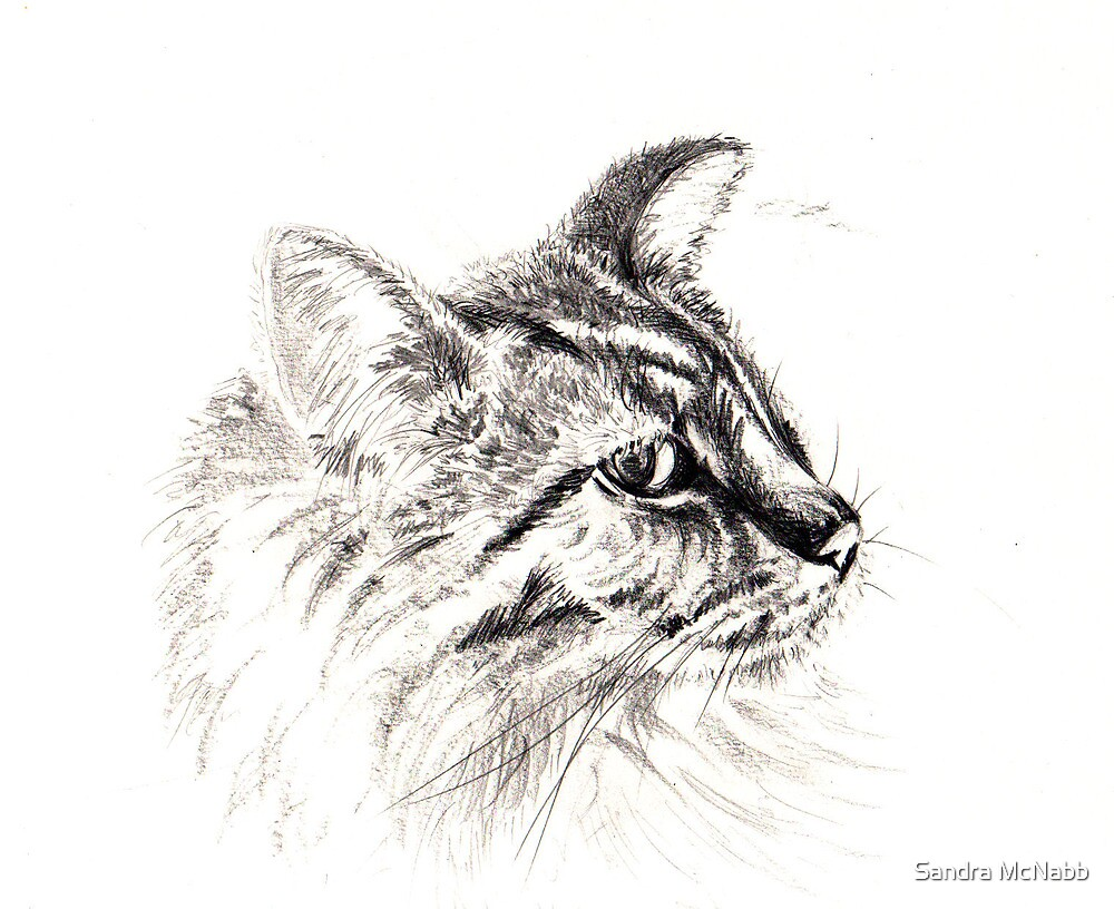 cat by Sandra McNabb
