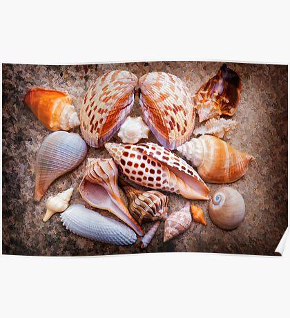 Seashells of Sanibel Island Poster