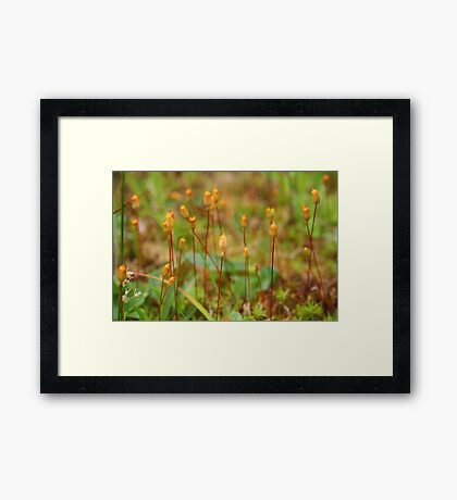Micro Forest Framed Print