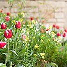 Spring Has Sprung by Anne Gilbert