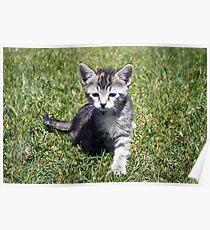 Clank the Kitten Poster