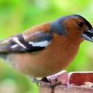 Cheeky Chaffinch by J J  Everson