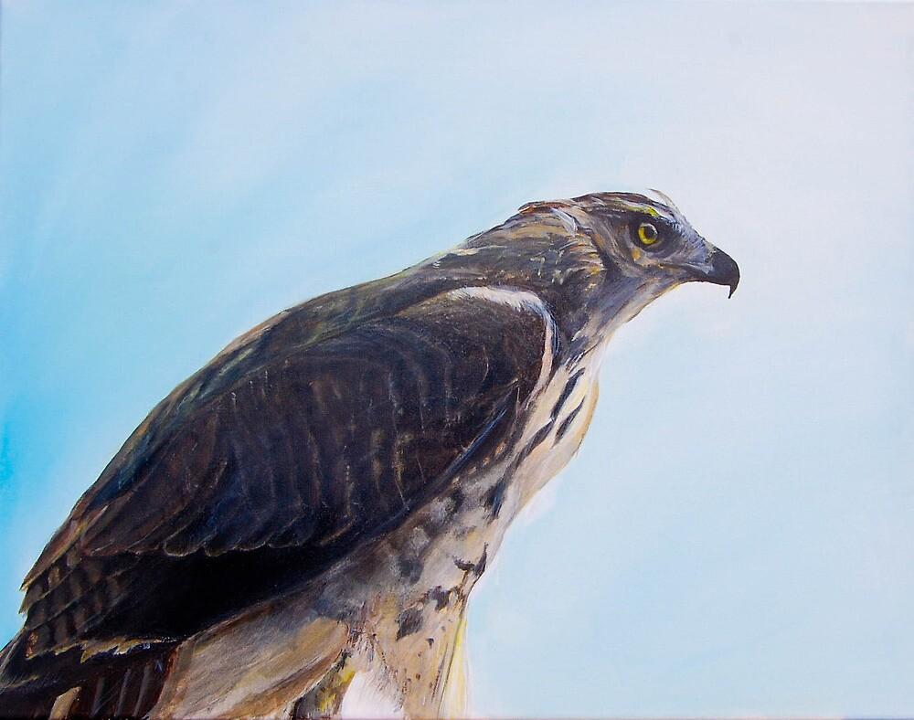 Hawk by James Kruse