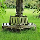 Best Seat In The Wood by Clive