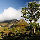 Horny Pine by Robert Mullner