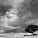 Shelter from the angry sky - Victoria Australia by Norman Repacholi