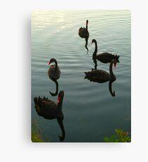 Black Swans  at Sunset Canvas Print