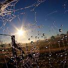 Sunburst by Kym Howard