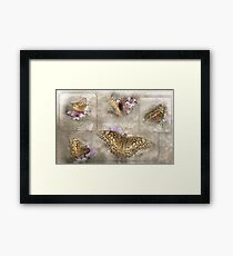 Variegated Fritillary ( Euptoieta Claudia) Days of May Framed Print