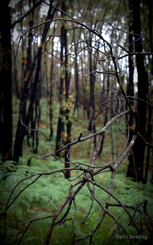 Stringy Bark Forest, Norton Summit by Ben Loveday