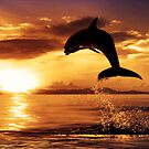 Dolphin jump by Street-Art