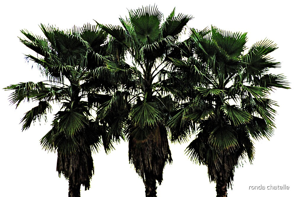 Whispering Palms by ronda chatelle