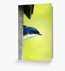 Swallow in Nestbox Greeting Card