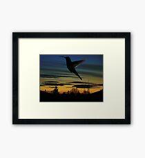 Evening Hummingbird Framed Print