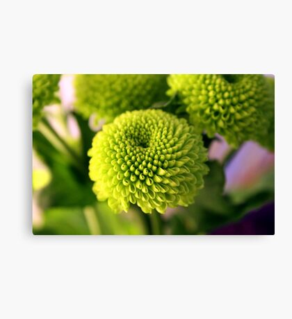Mini Topiary Canvas Print