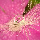 Wild Flower Dandelion Drops by Gazart
