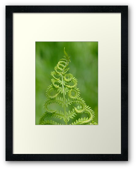 Dance Of The Fern by Tracy Wazny