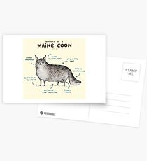 Anatomy of a Maine Coon Postcards