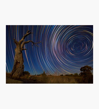Dead Tree Stars II Photographic Print