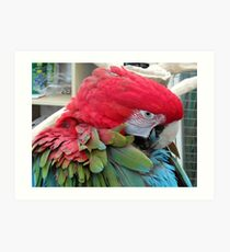 32 - PARROT - DAVE EDWARDS - 2012 Art Print