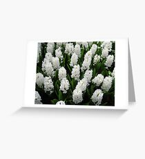 Heavenly Hyacinths - Keukenhof Gardens Greeting Card