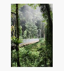A bridge to Gondwanaland Photographic Print