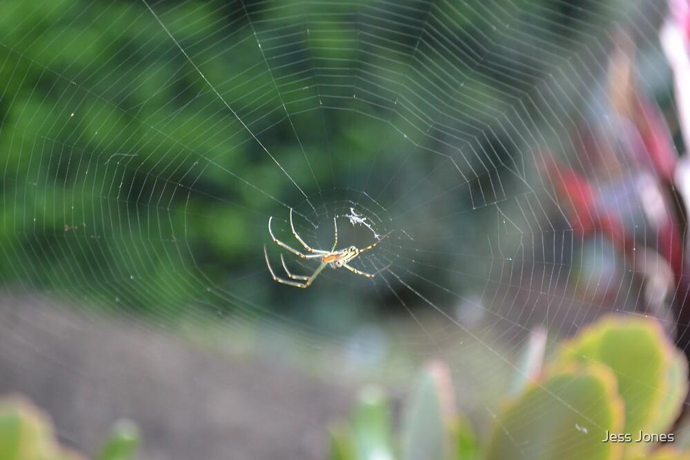 Spider & Web by Jess Jones
