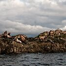 Lounging on the Belle Chain Islets by toby snelgrove  IPA