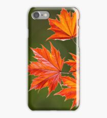 Maple Leaves Abstract iPhone Case/Skin