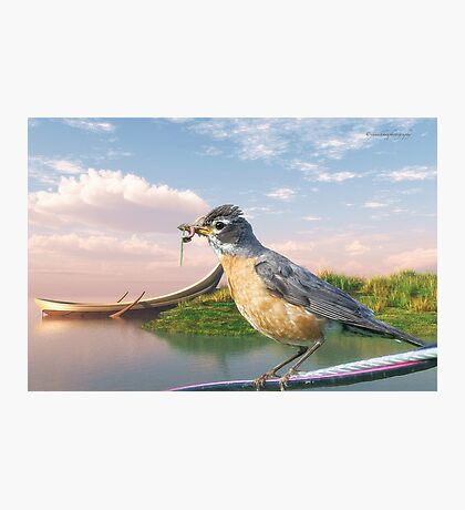 American Robin and a Mouthful Photographic Print