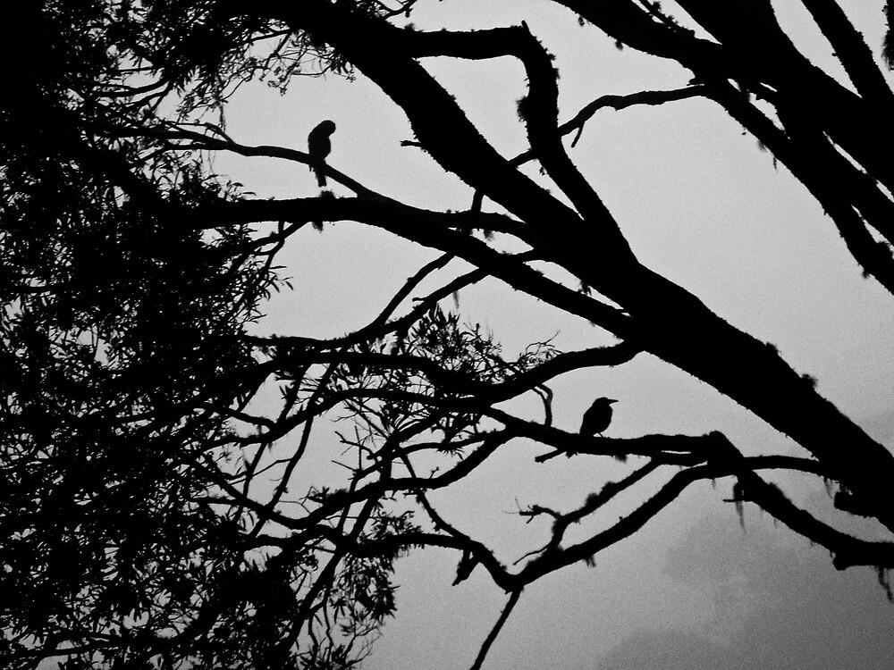 Galah & Magpie by Jordan Miscamble