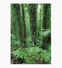 A study in green Photographic Print
