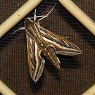 Colourful moth by georgieboy98